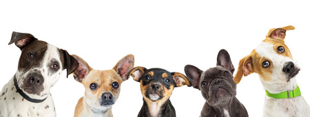 Foto de Row of different size and breed dogs over white horizontal social media or web abnner with room for text - Imagen libre de derechos