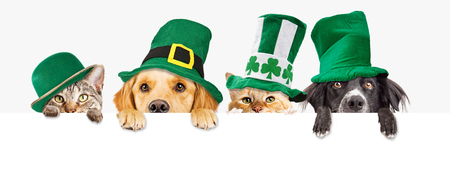 Photo for Row of cute dogs and cats wearing green St Patrick's Day hats while peeking over a blank white web banner or social media cover - Royalty Free Image