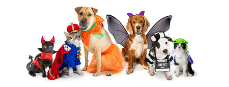 Foto de Row of dogs and cats together wearing cute Halloween costumes. Web banner or social media header on white. - Imagen libre de derechos