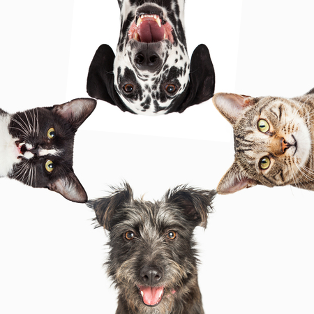 Photo for Dogs and cats with happy expressions peeking into a white square - Royalty Free Image