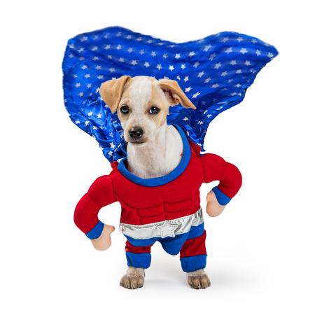 Foto de Funny photo of dog wearing superhero Halloween costume with cape flapping in the wind - Imagen libre de derechos