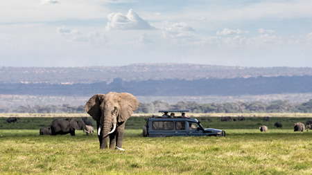 Foto de African safari scene with large elephant and unidentifiable tourists in safari vehicle - Imagen libre de derechos