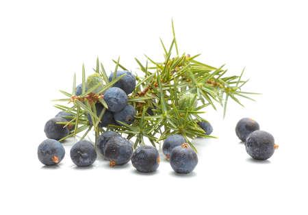 Photo for Common Juniper (Juniperus communis) fruits - Royalty Free Image