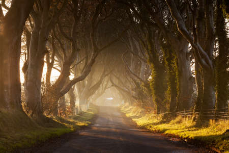 Photo for Dark Hedges - Royalty Free Image