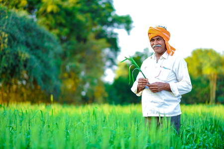 Foto für Indian farmer holding crop plant in his Wheat field - Lizenzfreies Bild