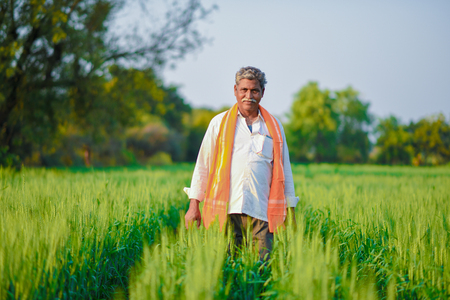 Foto de Indian farmer holding crop plant in his Wheat field - Imagen libre de derechos