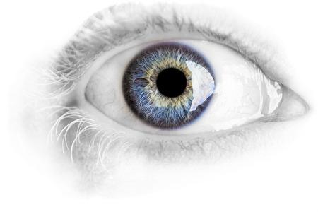 Foto de Macro blue eye with lots of details using studio lights isolated on white - Imagen libre de derechos