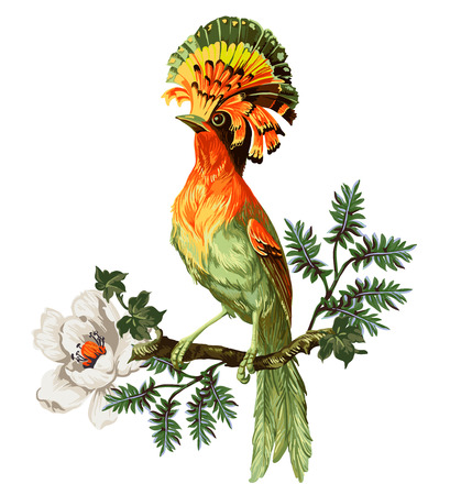 Illustration for Bird of Paradise and exotic flowers on a white background - Royalty Free Image