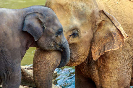 Photo pour cuddling elephant and baby elephant - image libre de droit