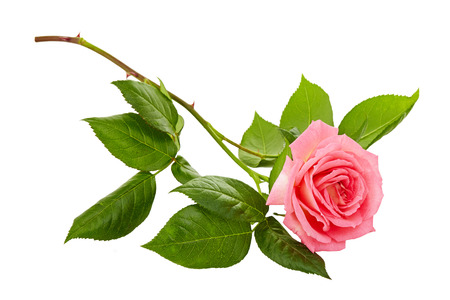 Photo for pink roses bouquet on a white background - Royalty Free Image