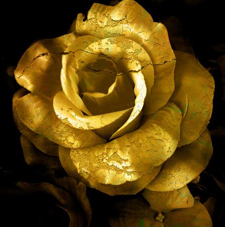 Photo pour Gold cracked flower, old rose, art dark tone. - image libre de droit