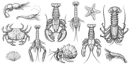 Illustration for Crustaceans vector illustrations set. - Royalty Free Image