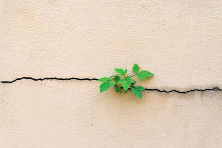 Foto de Tree growing through cracked wall - Imagen libre de derechos