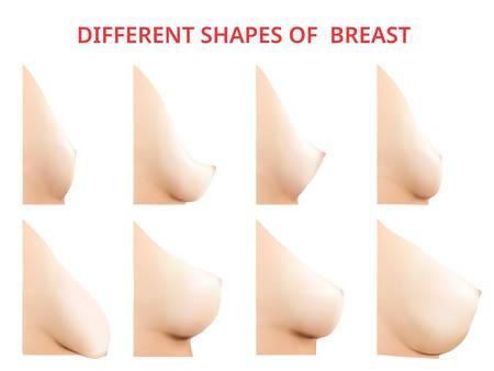 Illustrazione per Different shapes of Breast, Women Breast, Vector illustration - Immagini Royalty Free