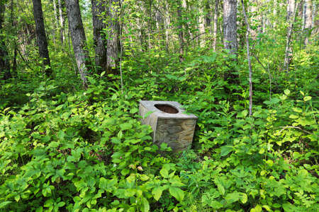 Photo for A toilet seat in the middle of the forest - Royalty Free Image