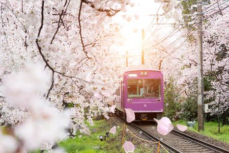 Foto de View of Kyoto local train traveling on rail tracks with flourishing cherry blossoms along the railway in Kyoto, Japan. - Imagen libre de derechos