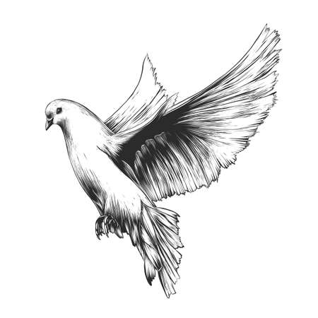Illustration pour Vector engraved style illustration for posters, decoration and print. Hand drawn sketch of white dove in monochrome isolated on white background. Detailed vintage woodcut style drawing. Dove - image libre de droit