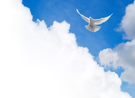 Photo pour White dove flying in the sky  Template with a text field  - image libre de droit