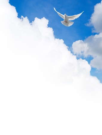 Photo for White dove flying in the sky. Template with a text field. - Royalty Free Image