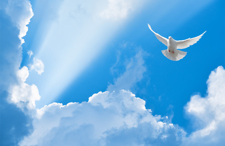 Photo for White dove flying in the sun rays among the clouds - Royalty Free Image