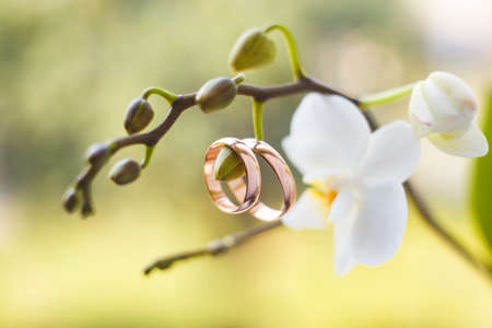 Photo pour Golden wedding rings hanging on white orchid - image libre de droit
