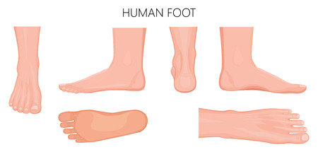 Ilustración de Different views  of a human foot (front, back, side, lateral, medial, dorsal and plantar) isolated on white background. Vector illustration for medical (health care) use. EPS 10. - Imagen libre de derechos