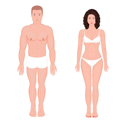Illustrazione per Front view of  body of European man and woman in full growth in underwear. Vector illustration for advertising, medical (health care), bodybuilding, sport publication. EPS 8 - Immagini Royalty Free