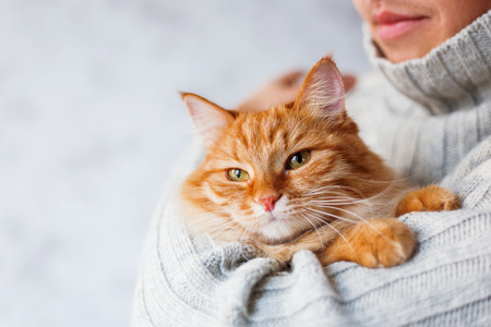 Photo pour Man in knitted sweater holding ginger cat. - image libre de droit
