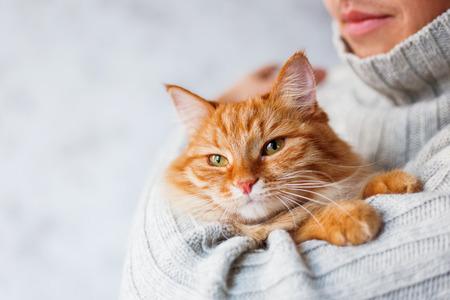 Foto de Man in knitted sweater holding ginger cat. - Imagen libre de derechos