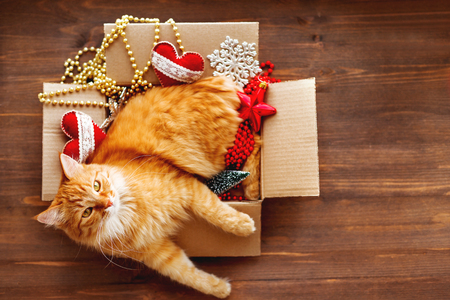 Photo for Ginger cat lies in box with Christmas and New Year decorations on wooden background. Fluffy pet is doing to sleep there.  - Royalty Free Image