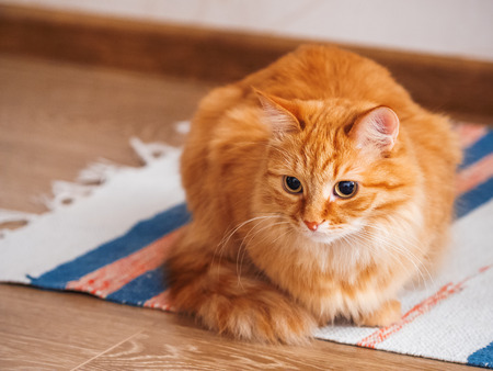 Photo pour Cute ginger cat sitting on striped homemade rug. Fluffy pet on carpet. - image libre de droit