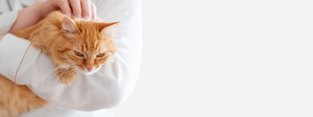 Photo pour Cute ginger cat is sitting on man's hands and staring at camera. Symbol of fluffy pet adoption. Copy space. - image libre de droit