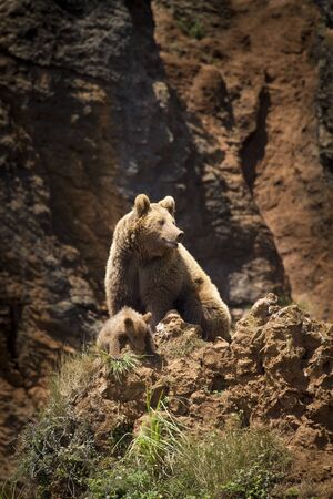 Foto de Mother bear and bear cub - Imagen libre de derechos