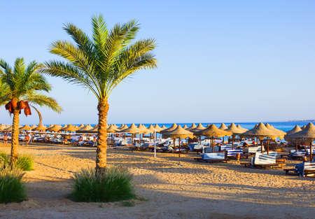 Foto de Palm trees on the beach in Egypt on the Red Sea - Imagen libre de derechos