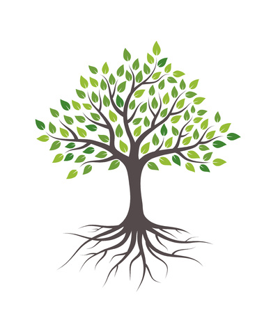 Illustration pour Tree with green leaves and roots. Isolated on white background. - image libre de droit
