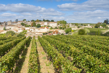 Photo pour Vineyard at Saint-Emilion, France - image libre de droit