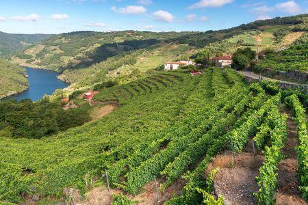 Photo pour Vineyards along Minho River, Ribeira Sacra in Lugo province, Spain - image libre de droit