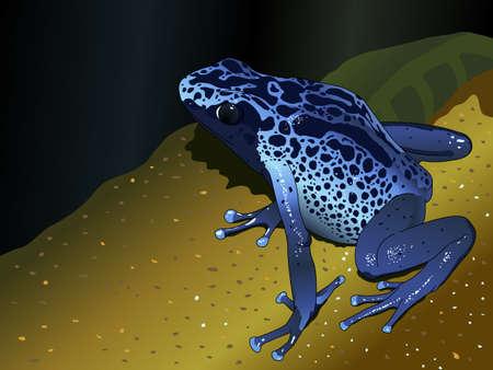 Blue poison dart frog - Dendrobates-pumilio on dark blue background - Vector image
