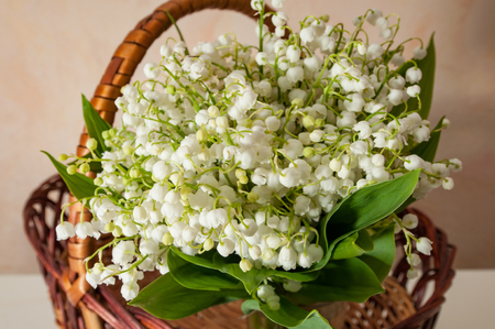Photo pour lilly of the valley with green leaves close up in the basket - image libre de droit
