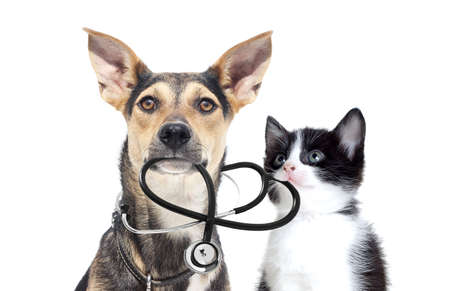 Foto per dog and a cat and a stethoscope - Immagine Royalty Free