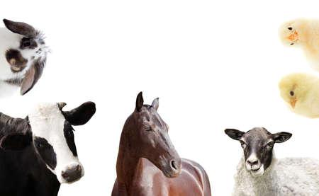 Foto de set of farm animals - Imagen libre de derechos