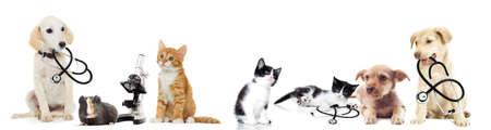 Photo pour puppy and kitten vet - image libre de droit