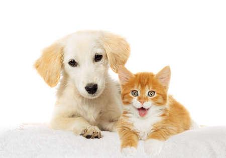 Beige puppy and red kitten watching
