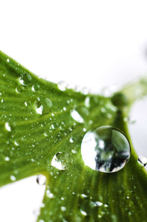 Photo pour Water drops close up on green leaves of a tree. Macro photo - image libre de droit
