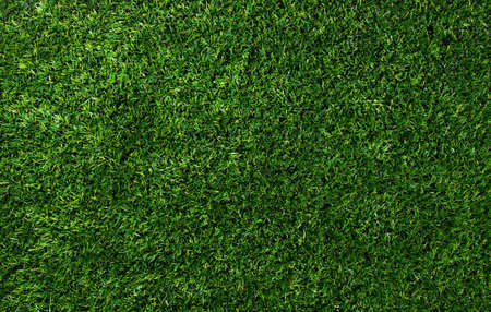 Photo for Background of a green grass. Texture green lawn - Royalty Free Image