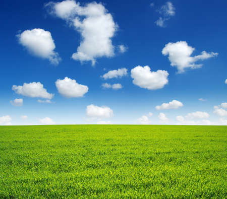 Photo pour field of green grass and sky - image libre de droit