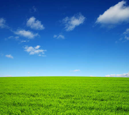 Photo for field of green grass and sky - Royalty Free Image
