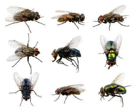 Photo pour Set of insects fly on white - image libre de droit