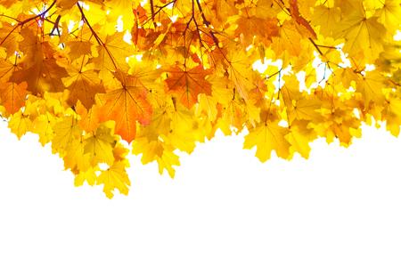 Photo pour Bright autumn maple leaf on a white background. - image libre de droit