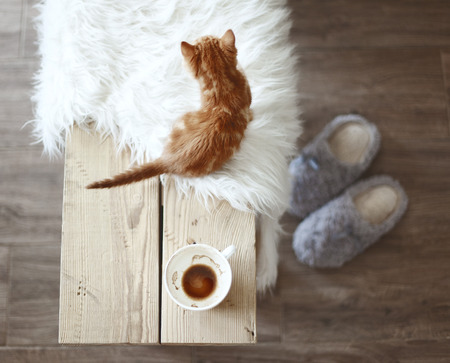 Photo for Still life details, cup of coffee on rustic bench, top view point - Royalty Free Image